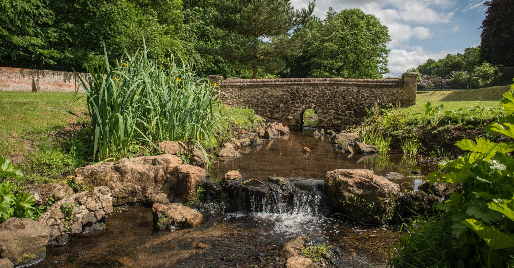 Tillingbourne River with aquatic plants and wildlife