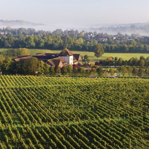 Visit Denbies wine for a vineyard tour