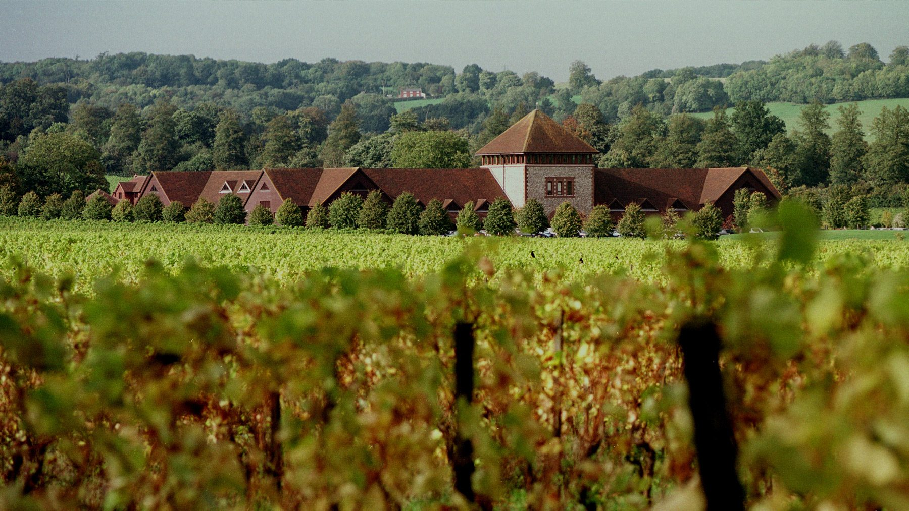 Visit Denbies wine for a vineyard tour